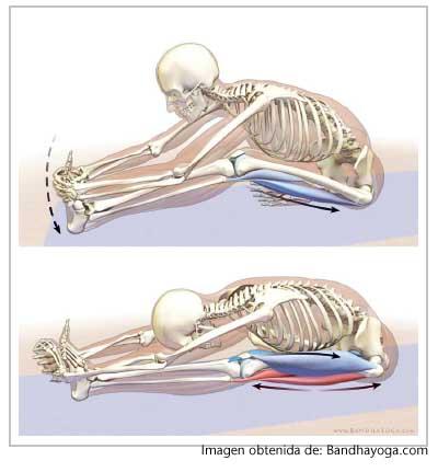 mejorar tus elasticidad